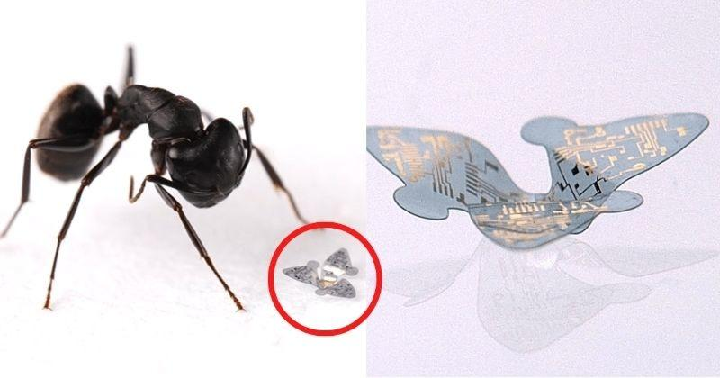 Smaller Than An Ant, World's Smallest Flying Robot Tracks Air Pollution