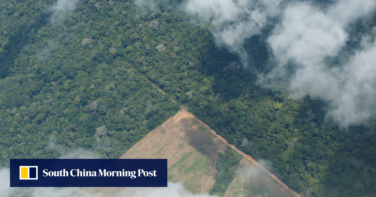 Facebook bans sales of Amazon rainforest on its apps