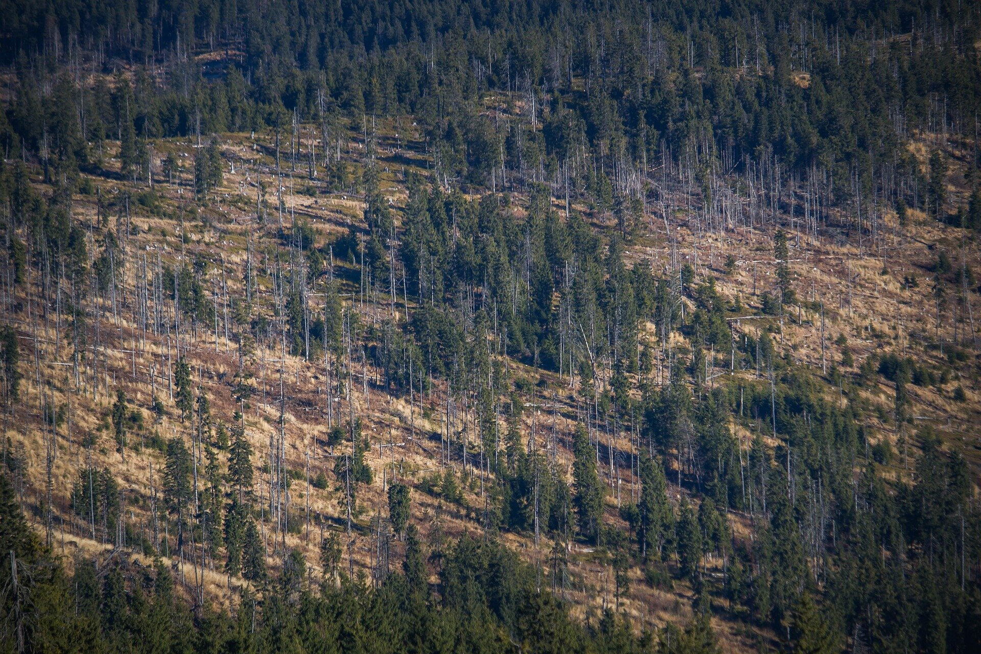 More inclusive and coherent global action on deforestation urgently needed