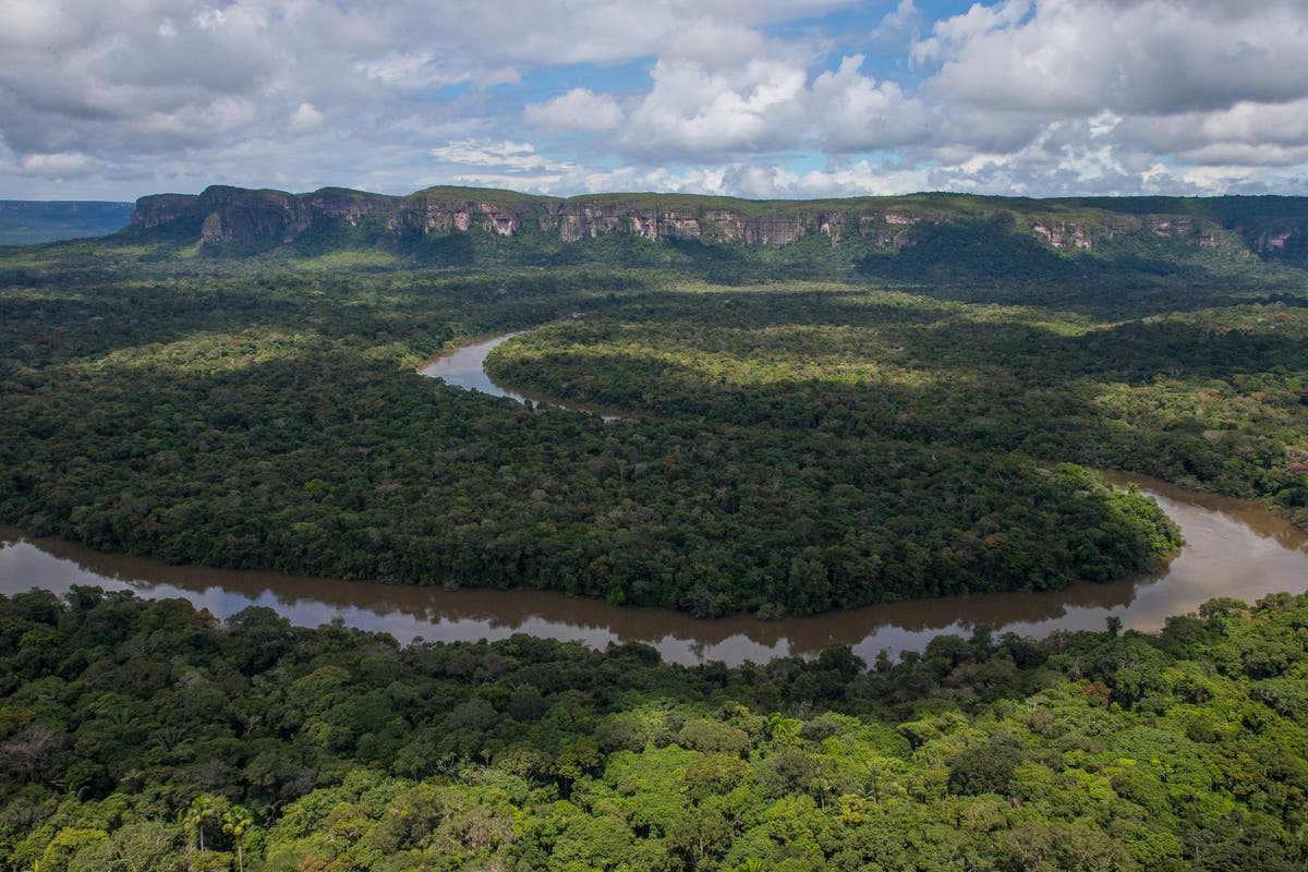 Colombia's Amazon rainforest 'has lost area size of Wales despite £250m from UK to limit deforestation'