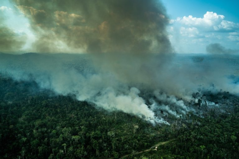 Amazon deforestation jumps sharply in April