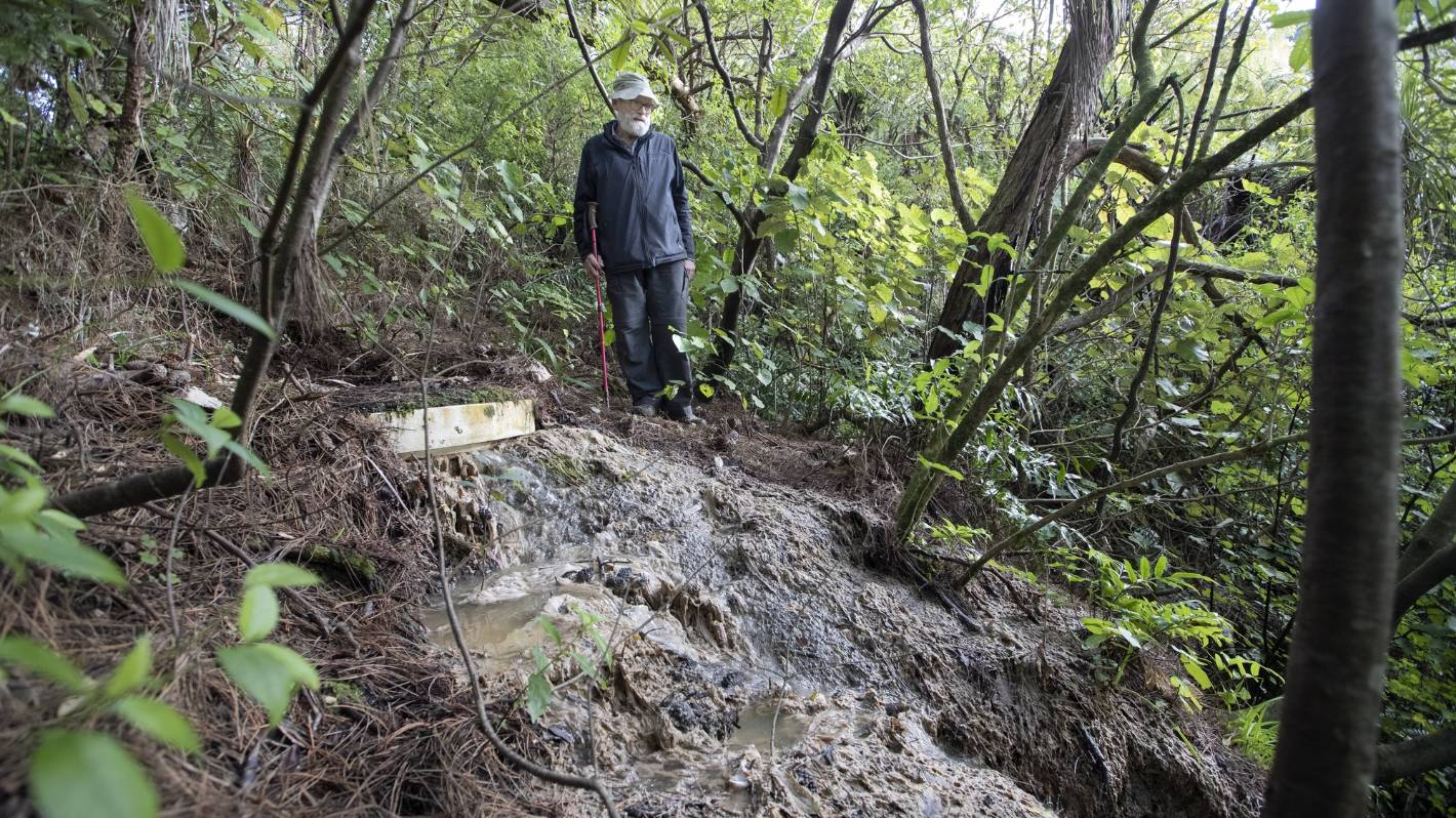 Wellington's sewage struggles: Stream contaminated by leaking pipe, backyard strewn with sewage