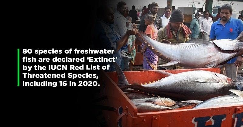 Freshwater Fish Population Is On The Decline Thanks To Us & Globally They Are Facing Extinction