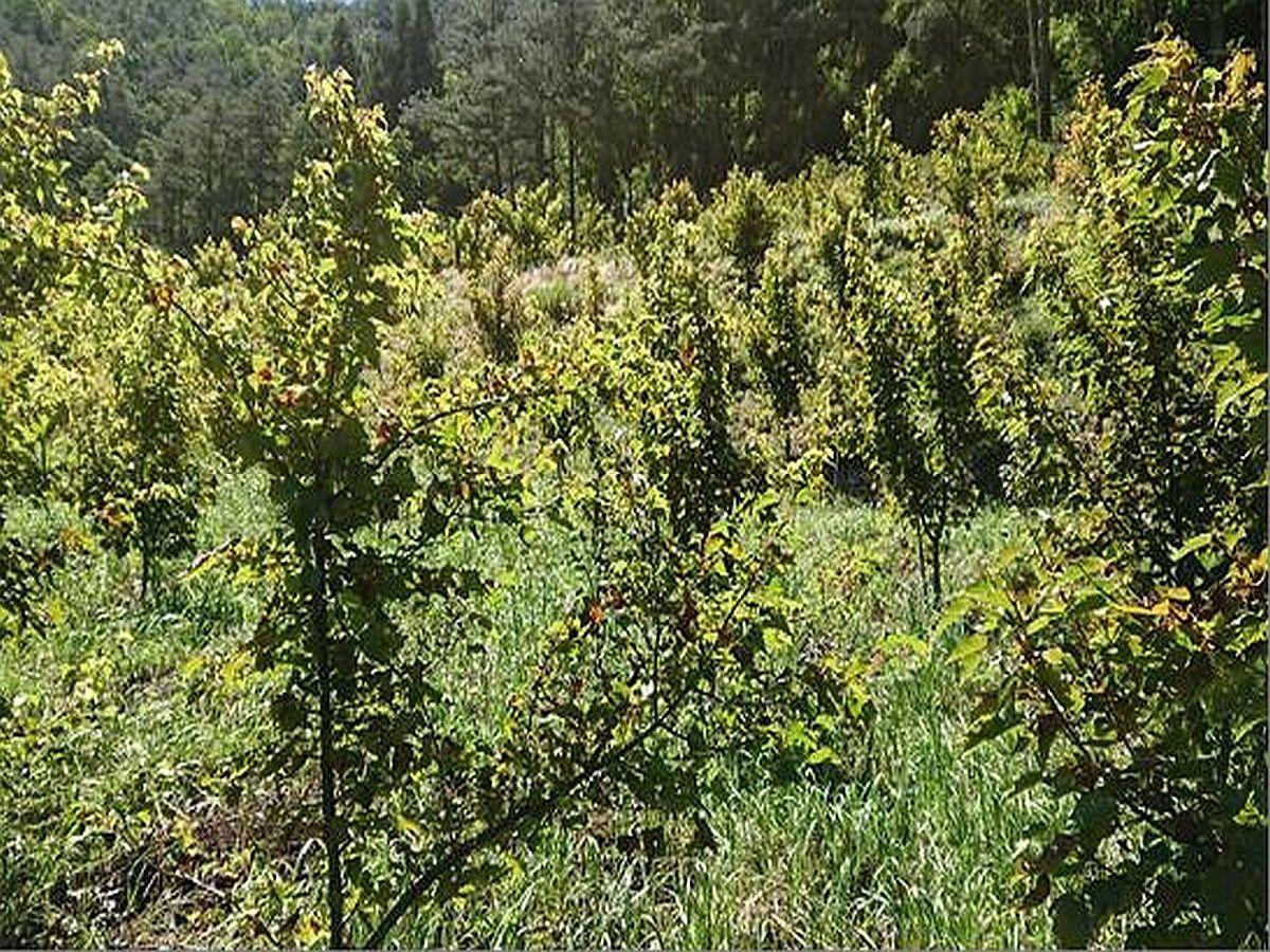 櫻花鉤吻鮭棲地復育造林 將植樹13000株