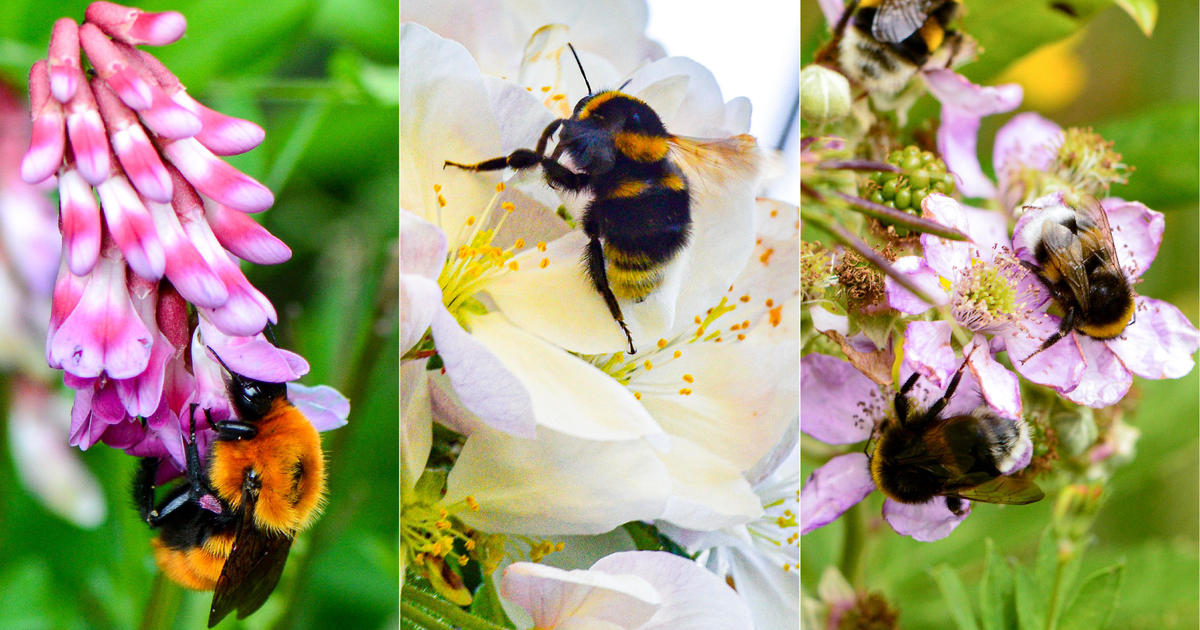 25% of wild bee species have gone missing since the 1990s