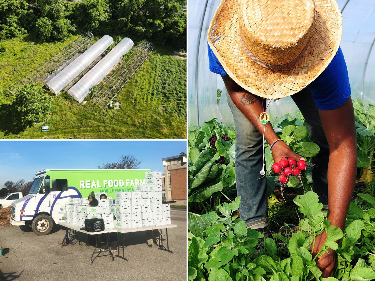 Climate Corps America: The urban farms transforming how America's most vulnerable communities eat