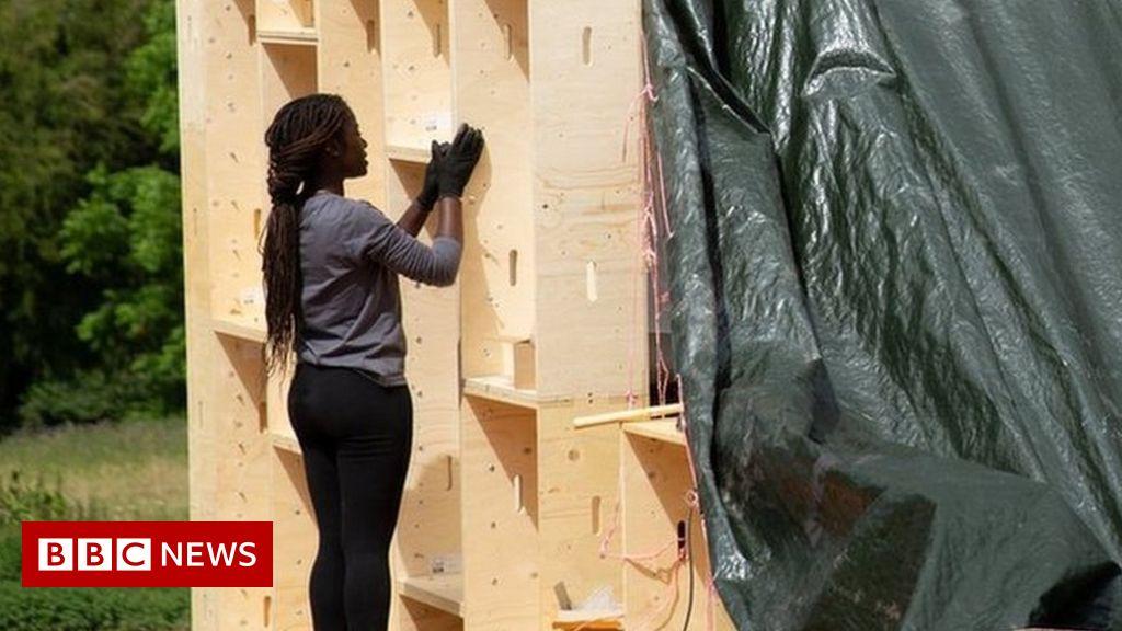 Timber shortage due to 'unprecedented' post-lockdown demand