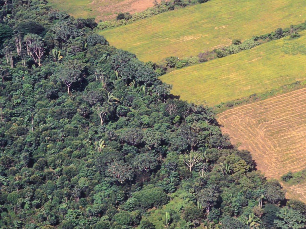 Cathedral City cheese, Anchor butter and Cadbury chocolate 'linked to Amazon deforestation', Greenpeace claims
