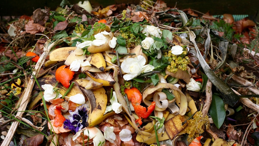 Regional councils join bioenergy project to reduce waste and greenhouse emissions