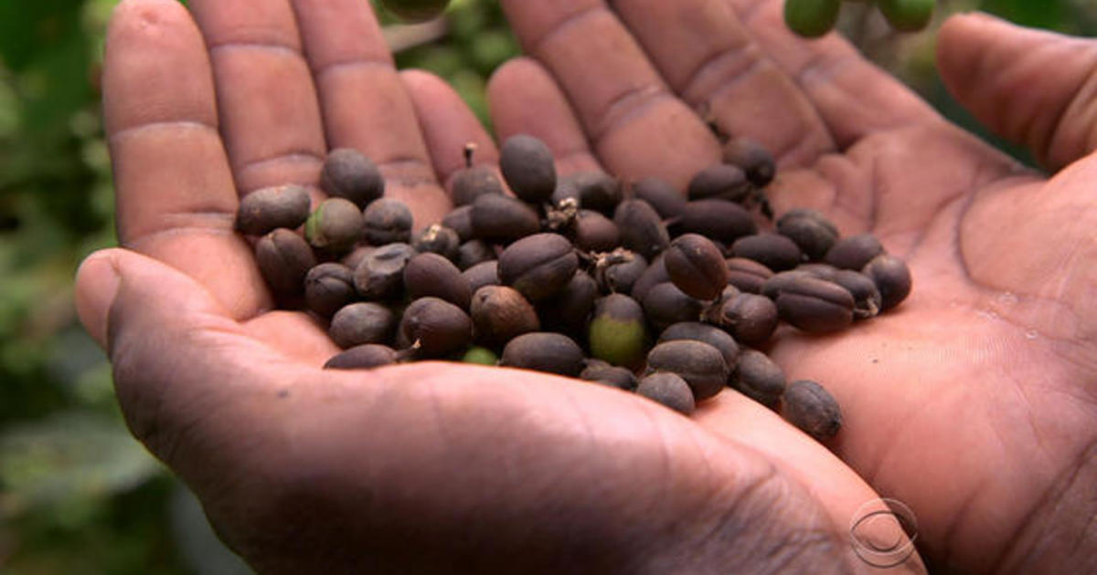 Climate change could deny you your favorite cup of coffee