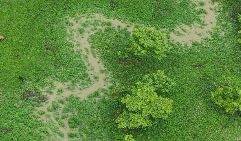 Deforestation from cattle ranching also hurts rivers in Nicaragua, study says