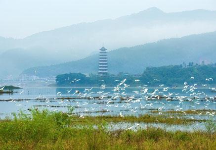 重庆首届生态保护修复十大案例评选揭晓_热点关注