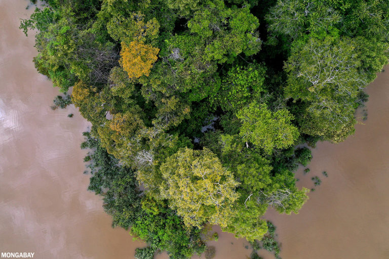 New index measuring rainforest vulnerability to sound alarm on tipping points