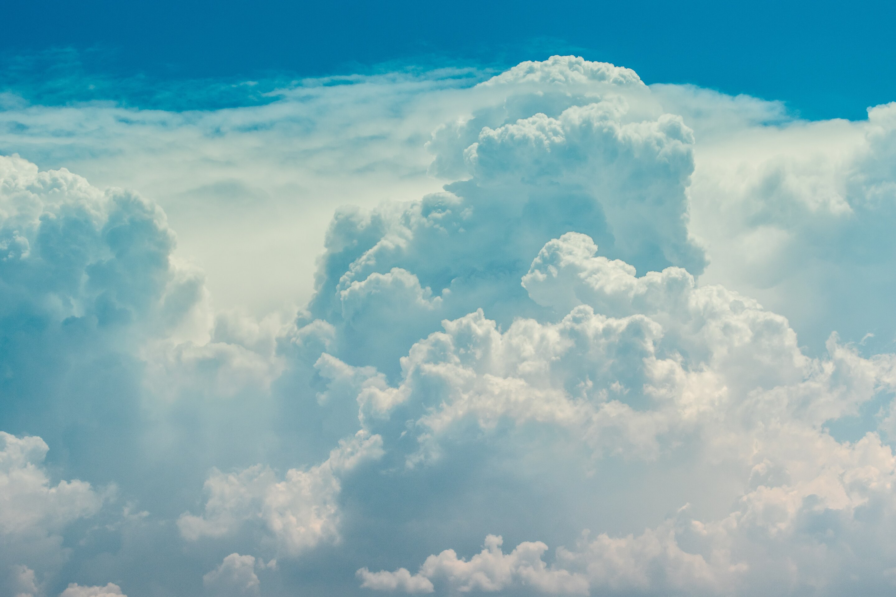 Observations confirm that aerosols formed from plant-emitted compounds can make clouds brighter