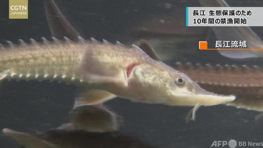 動画:生態保護のため10年間の禁漁開始 長江