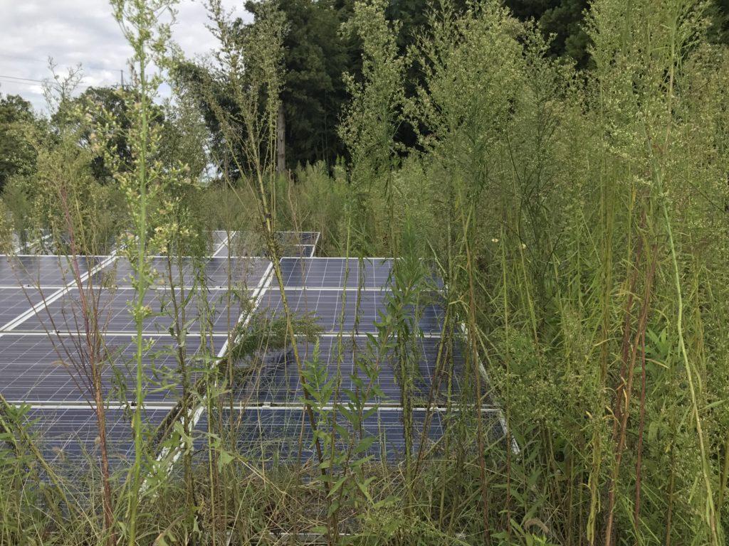 最安値保証!Energy Creation株式会社が太陽光発電所の格安!除草サービスの提供を開始
