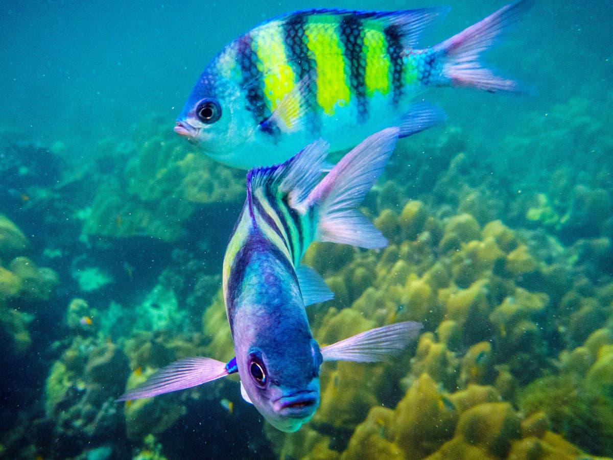 'Abundant' paint pollution in seas an 'overlooked threat' to marine wildlife, scientists warn