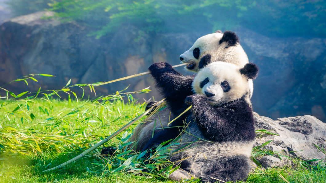 陸雙管齊下護生物多樣性 15億基金與五大國家公園